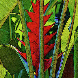 Craig Wood - Red Heliconia
