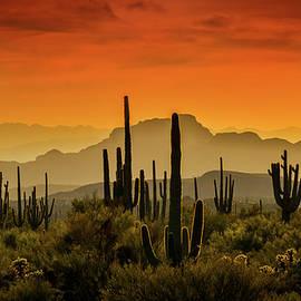 Red Hot Mountain Sunset  by Saija Lehtonen