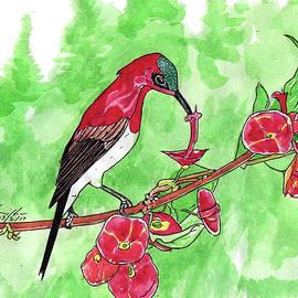 Dwayne Hamilton - Red Humming Bird
