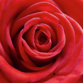 Johanna Hurmerinta - Red Is Gorgeous