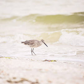 Scott Pellegrin - Red Knot Foraging in the Surf