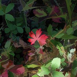 Aliceann Carlton - Red Leaf Herald