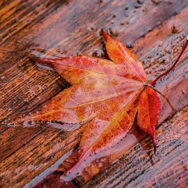 Red Leaf in the Rain by Teresa Wilson