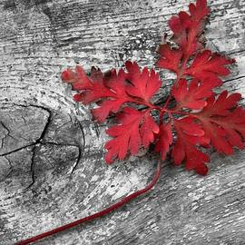 Red Leaf on Wood by Patricia Strand