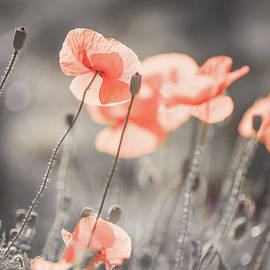 Red Poppies Remembrance 3 by Jenny Rainbow