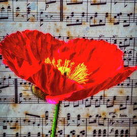 Garry Gay - Red Poppy And Sheet Music