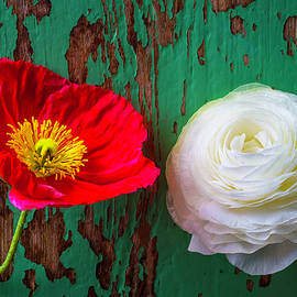 Red Poppy And White Ranunculus - Garry Gay