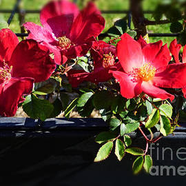 Red, Red Roses by Trudee Hunter