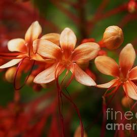 Red Ribbons by Tina Barnes-Weida