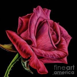 Sarah Batalka - Red Rose On Black- Square Format