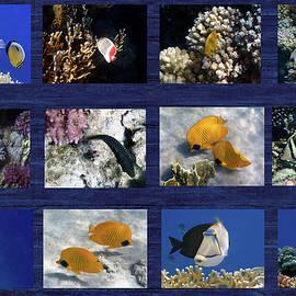 Red Sea Sealife Collage by Johanna Hurmerinta