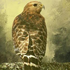 Myrna Bradshaw - Red Shouldered Hawk on watch