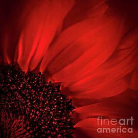 Red Silk by Mona Stut