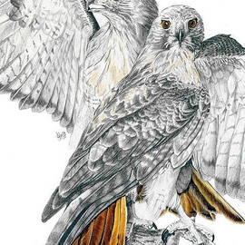 Barbara Keith - Red-Tailed Hawk
