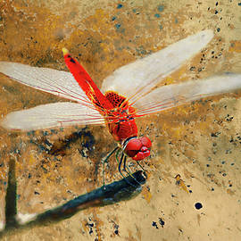 Bellesouth Studio - Red Veined Darter Dragonfly