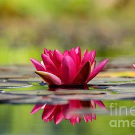 Teresa Zieba - Red Water Lilies