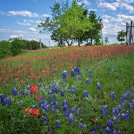 Lynn Bauer - Red White and Blue in the Hill Country