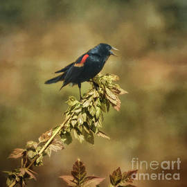 Janice Rae Pariza - Red Winged Blackbird