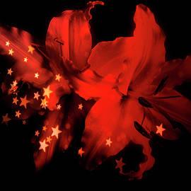 Johanna Hurmerinta - Red Winter Lilies With Stars
