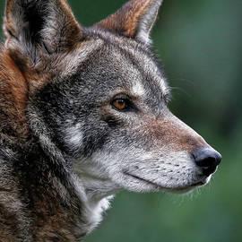 Athena Mckinzie - Red Wolf Profile