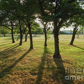 Redbud Grove by Phil Perkins