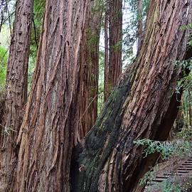 Warren Thompson - Redwood Family
