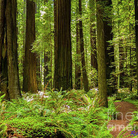 Redwood National Park by Ron Taylor