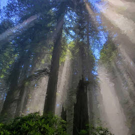 Redwood Sunbeam Impressions by Greg Norrell
