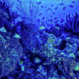 Debra and Dave Vanderlaan - Reef in Blues