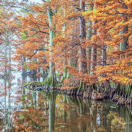 Reelfoot Lake 2015 12-13 Panorama by Jim Dollar