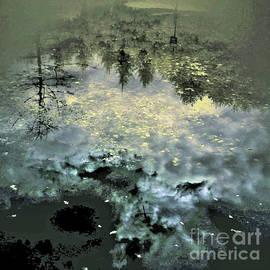Ron Evans - Reflecting The Woodland