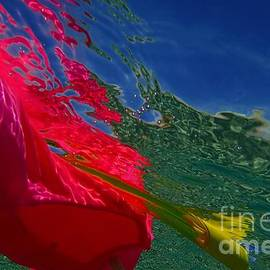 Catherine BELLOEIL - Reflection 5