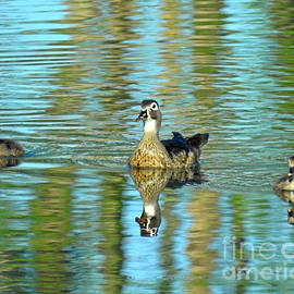 Kathy M Krause - Reflections Of Family Swim Lessons