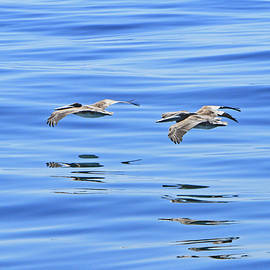 Reflections of Flight by Shoal Hollingsworth