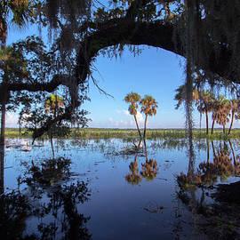 Patricia Twardzik - Reflections of Florida