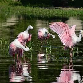 Patricia Twardzik - Reflections of Grandeur- Roseate Spoonbills
