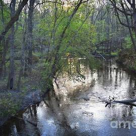 Skip Willits - REFLECTIONS ON THE CONGAREE CREEK