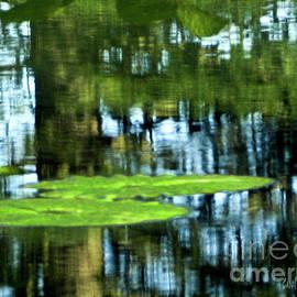 Carol F Austin - Reflective Water Lily Pond