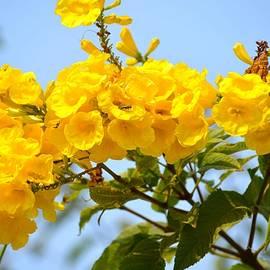 Sonali Gangane - Refreshing yellows
