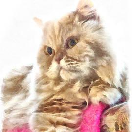 Regal Persian Cat by Elisabeth Lucas