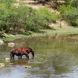 Cathy Franklin - Relaxing Along The Verde River