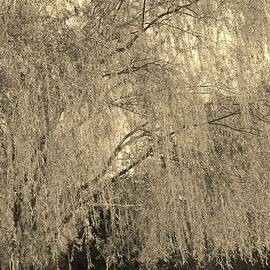 Mary Zeman - Remember our Willow