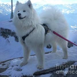 Rescue Dog At Nordkette, Tirol Mountains by Poet's Eye