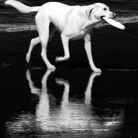 Lauren Leigh Hunter Fine Art Photography - Retriever
