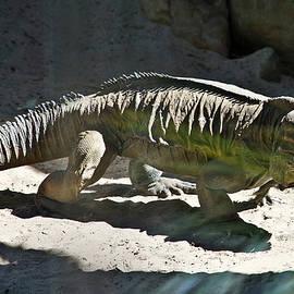 Miroslava Jurcik - Rhinoceros Iguana