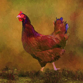 Sandi OReilly - Rhode Island Red Hen