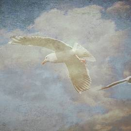 Flying Z Photography By Zayne Diamond - Riding the Wind, Seagulls