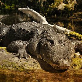 Right Eye Gator by Mark Fuge