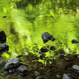 Riparian Green Reflection by Robert Potts