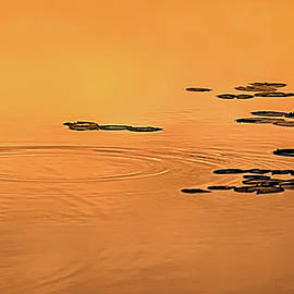 Ripples, Pads, And Reflected Sunrise by Robert Mitchell